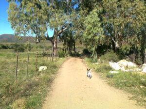 A WALK ON THE FARM
