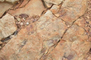 interesting fossils