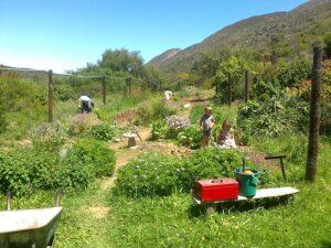 Working in the veggie garden
