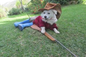 curly cowboy 2