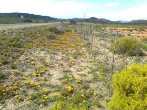 langvlak in spring