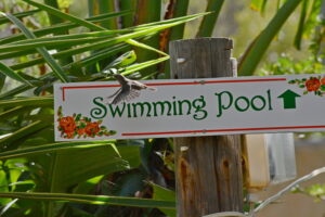 swimming pool sign smaller