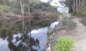Thomas cottage dam